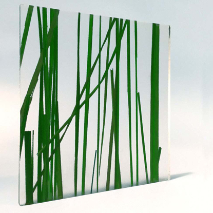 Picture of Tall Grass