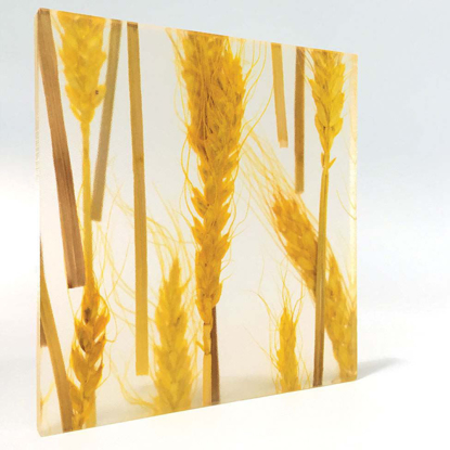 Picture of Wheat- Yellow